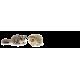 Otras pequeñas mascotas