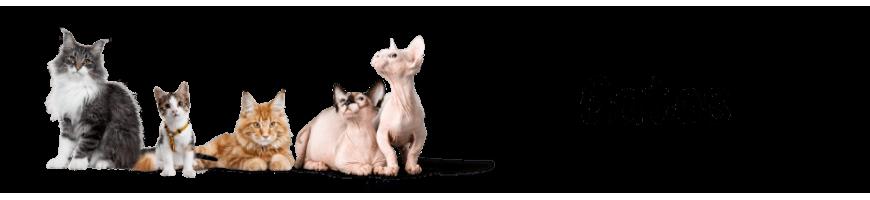 Piensos, complementos, juguetes y todo tipo de accesorios para tu gato